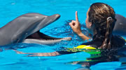 Swim with the dolphins in Freeport Bahamas